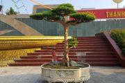 Toàn là cây cảnh đẹp, mang tính nghệ thuật rất cao