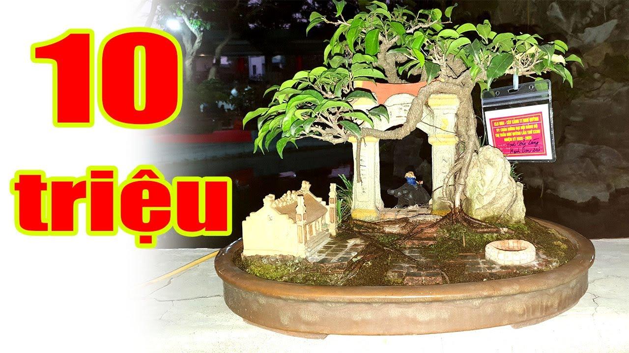Trưng bày cây cảnh nghệ thuật CLB Cây Cảnh TT Như Quỳnh, Hưng Yên