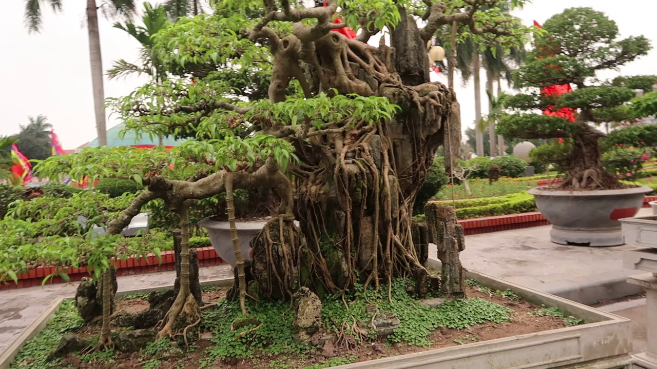 Triển lãm cây cảnh đẹp nhất việt nam ở Bắc Ninh, bonsai 101, dang tien thuy