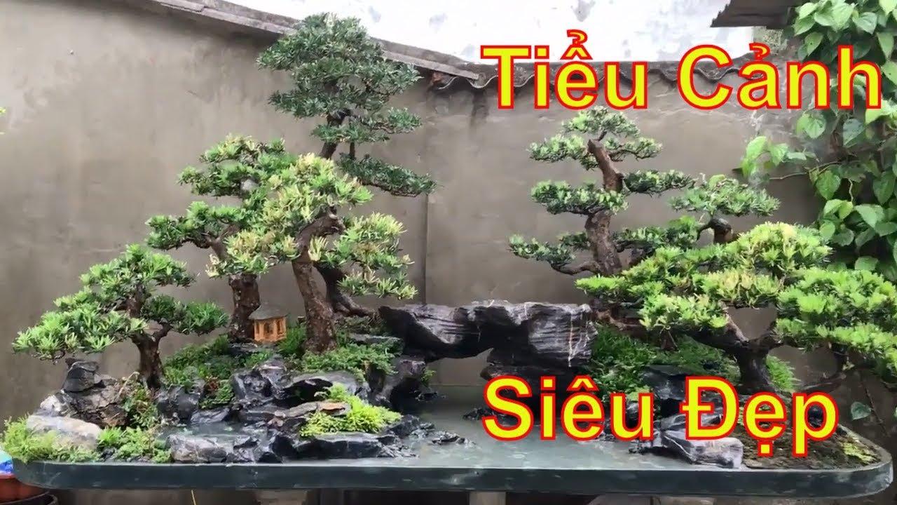 Vườn Bonsai mini tiểu cảnh của bác Dương Hà