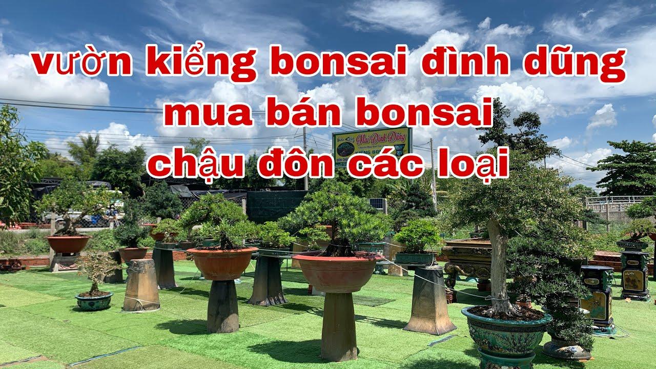Vườn Kiểng BonSai Đình Dũng 09 (cái mơn) mua bán bonsai vs chậu đôn các loại | Care BonSai | BsPc