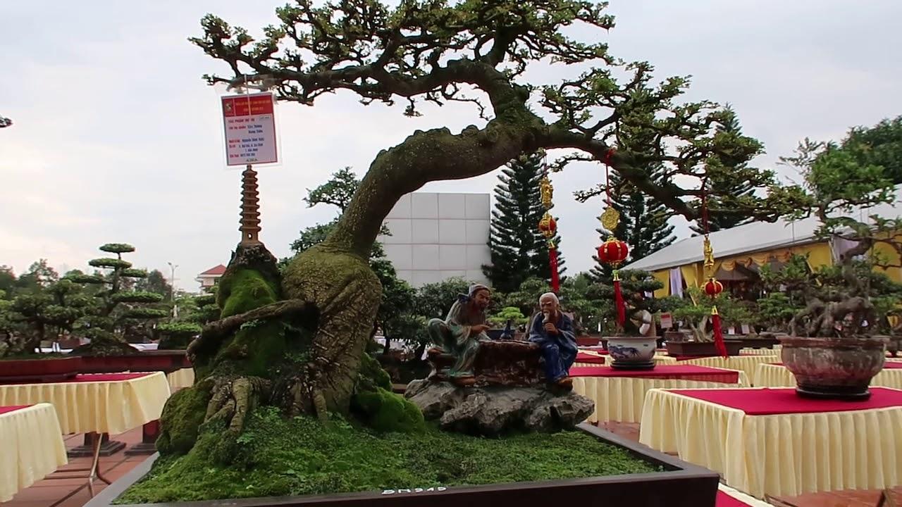 cây cảnh dễ trồng, bonsai raft, dang tien thuy