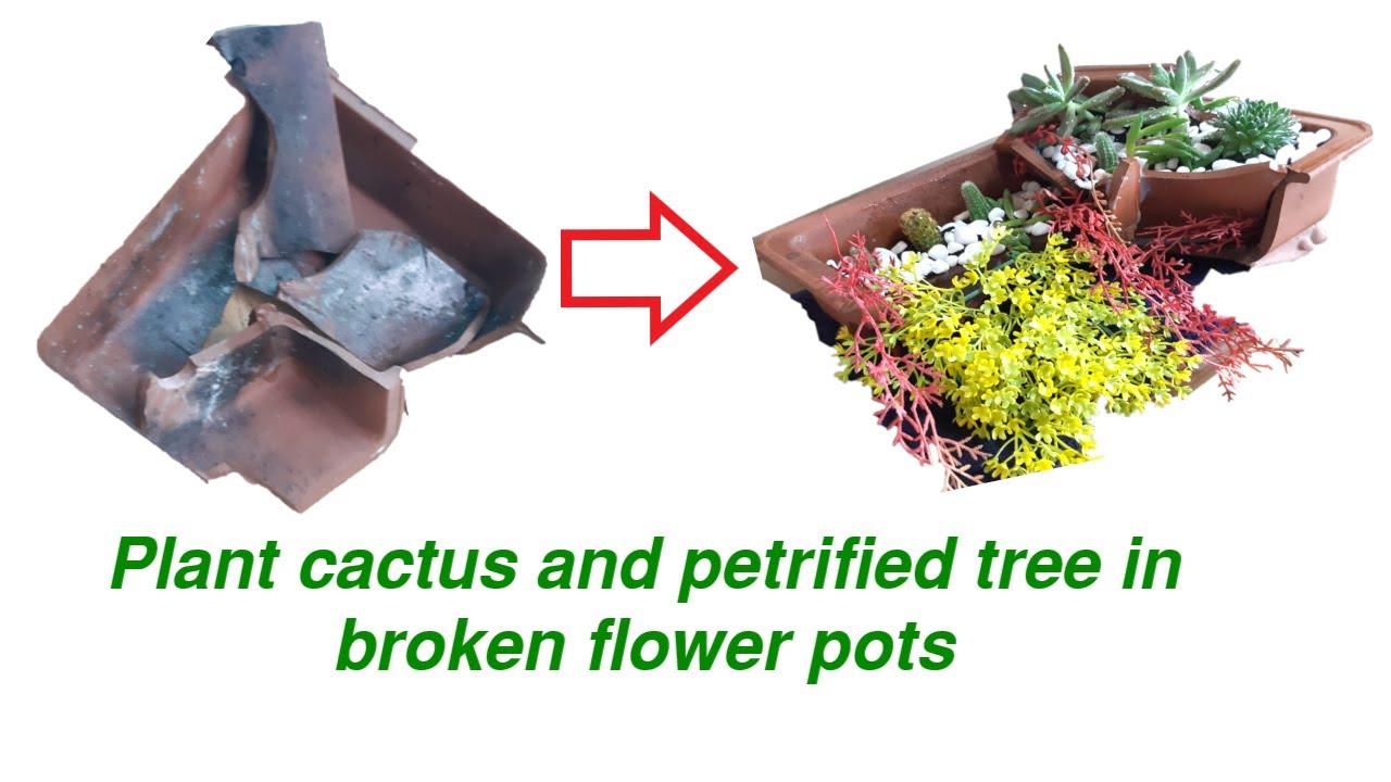 làm tiểu cảnh bằng chậu hoa vỡ tuyệt hay   Plant cactus in broken flower pot