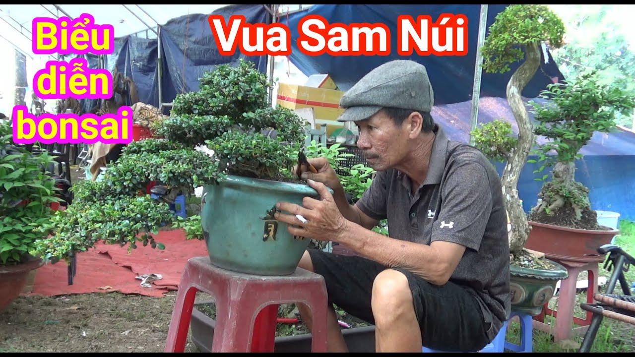 """"""" Vua Sam Núi """" biểu diễn Bonsai tại hội chợ cây cảnh đẹp báo giá 25tr/ tác phẩm đỗ duyên dáng"""