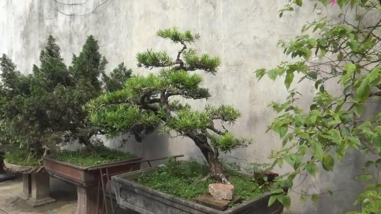 tham quan vườn cây cảnh chú lai, thái nguyên