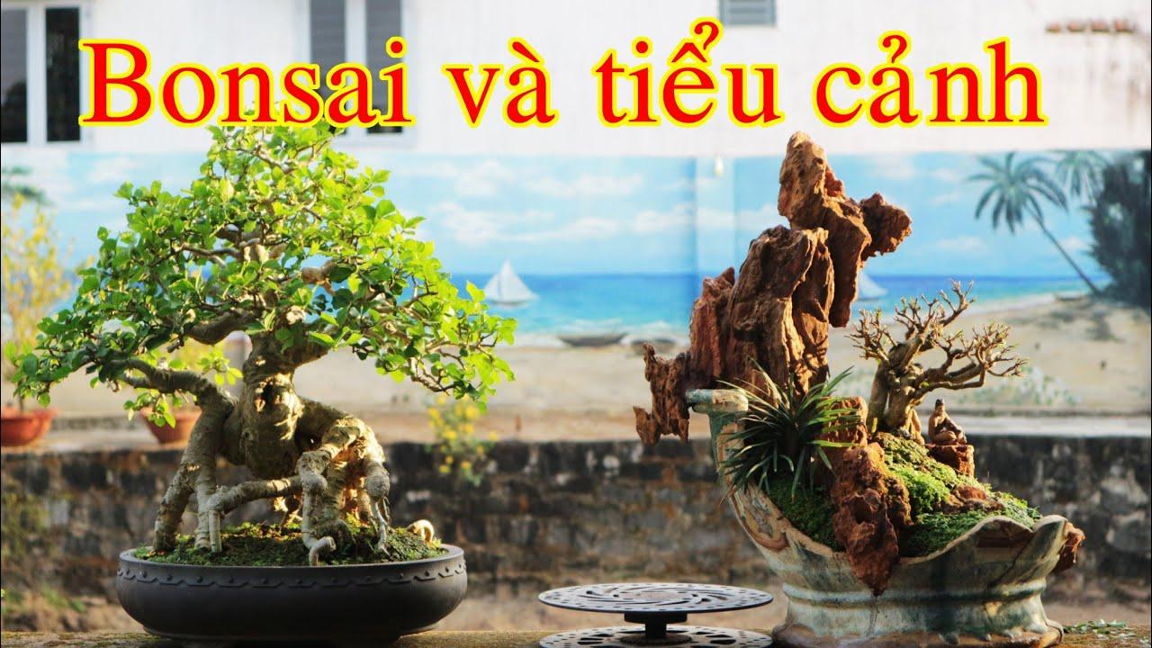 tiểu cảnh và bonsai đẹp
