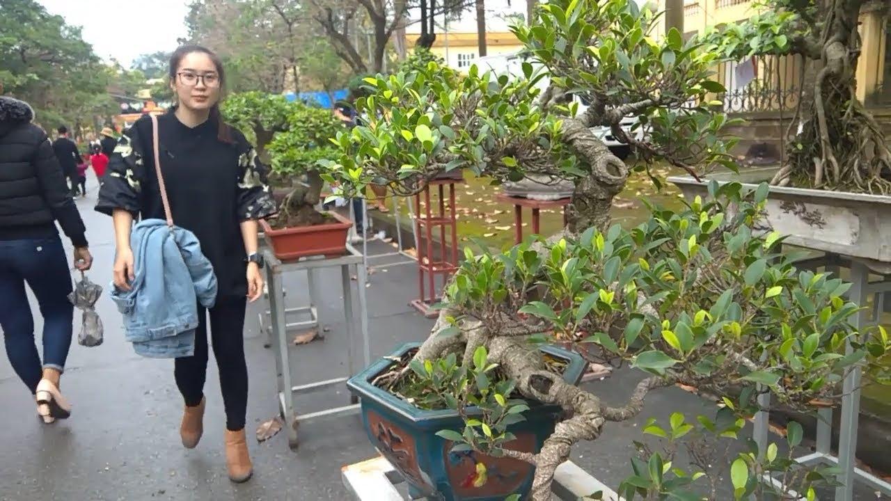 triển lãm bonsai hội lim 2019 cực đẹp