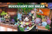 5 Succulent DIY ideas| 5 Ý tưởng trang trí sen đá tuyệt đẹp |多肉植物| 다육이들 | Suculentas