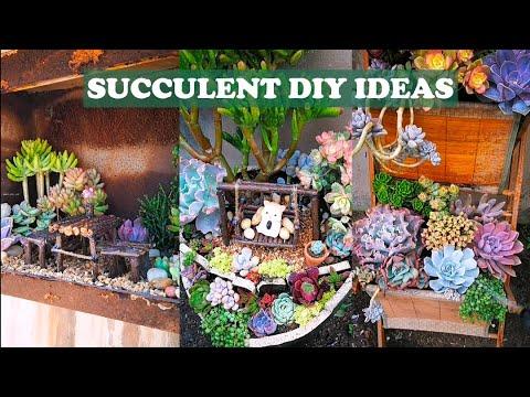 5 Succulent DIY ideas  5 Ý tưởng trang trí sen đá tuyệt đẹp  多肉植物  다육이들   Suculentas