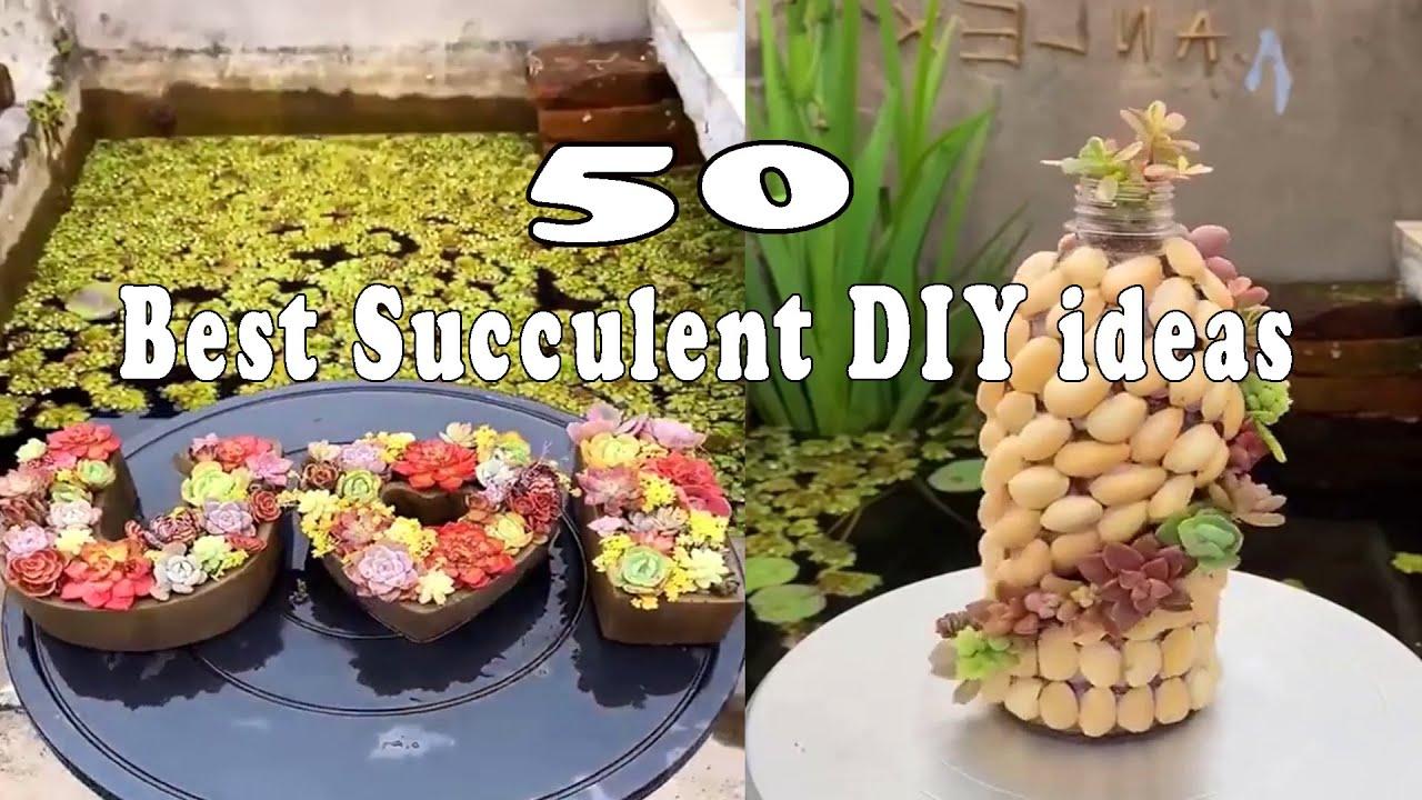 50 CáchTự Làm Chậu Trồng Sen Đá| Succulent DIY ideas| 多肉植物| 다육이들