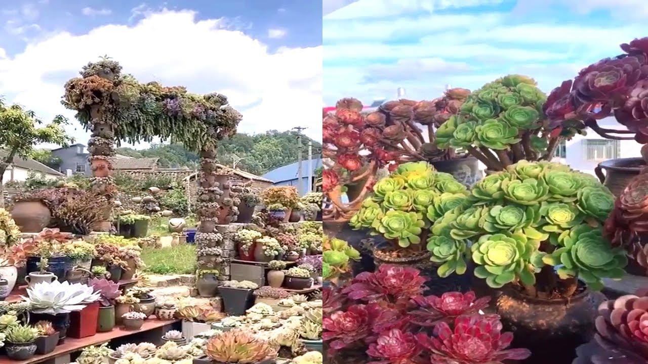 Bản Full//Vườn Sen Đá Đẹp Nhất Thế Giới/The Best Beautiful Succulent Back Garden Summer In The World