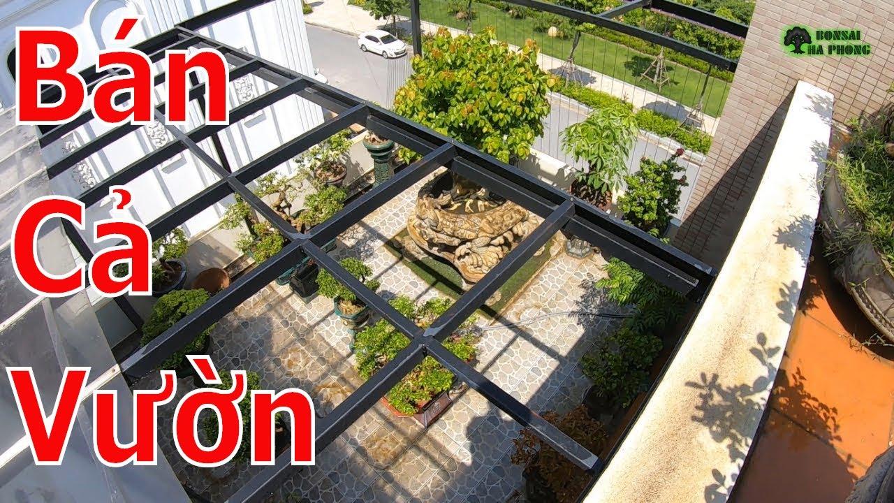✅Bán cả vườn cây cảnh bonsai nhiều cây đẹp✔️BShp(Mr.Khoa 0983538538)