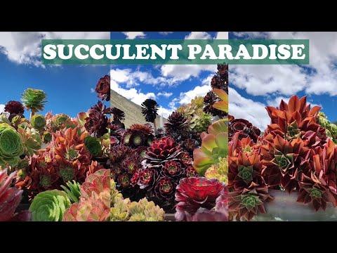 Succulent paradise | Thiên đường sen đá là có thật| 多肉植物| 다육이들 | Suculentas