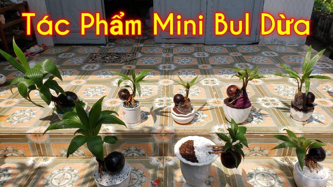 Bul Dừa    Bonsai Dừa    Cây Cảnh Phong Thủy, Cây Kiểng Mini   Tác phẩm mini