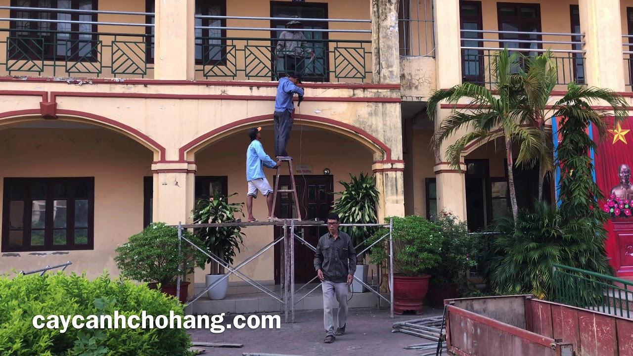 Dự Án Cải Tạo Cây Xanh Trường Học   CÂY CẢNH CHỢ HÀNG   Hải Phòng