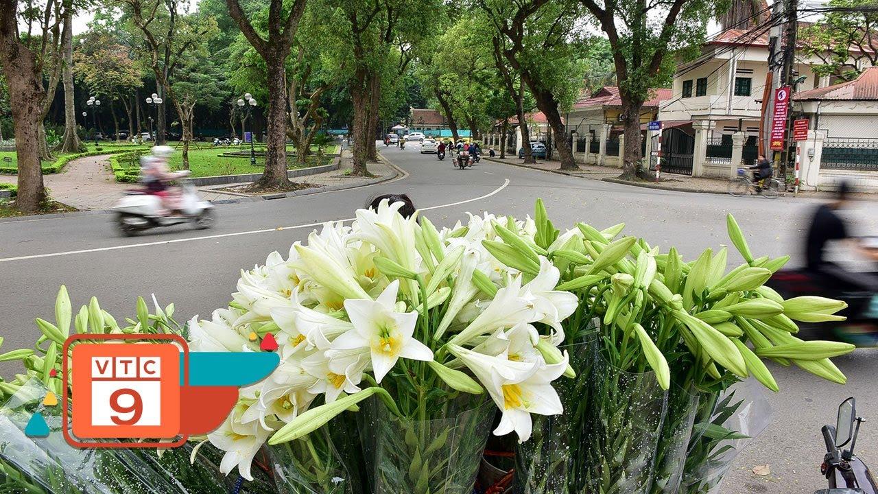 Hoa loa kèn, trắng tinh khôi khắp phố phường Hà Nội