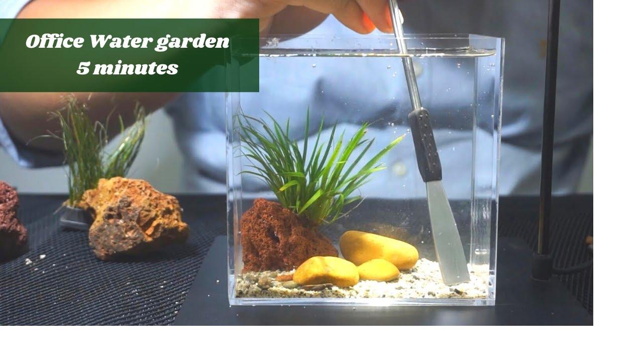Làm hồ cây trang trí văn phòng trong vòng 5 phút   Making office water garden only 5 minutes