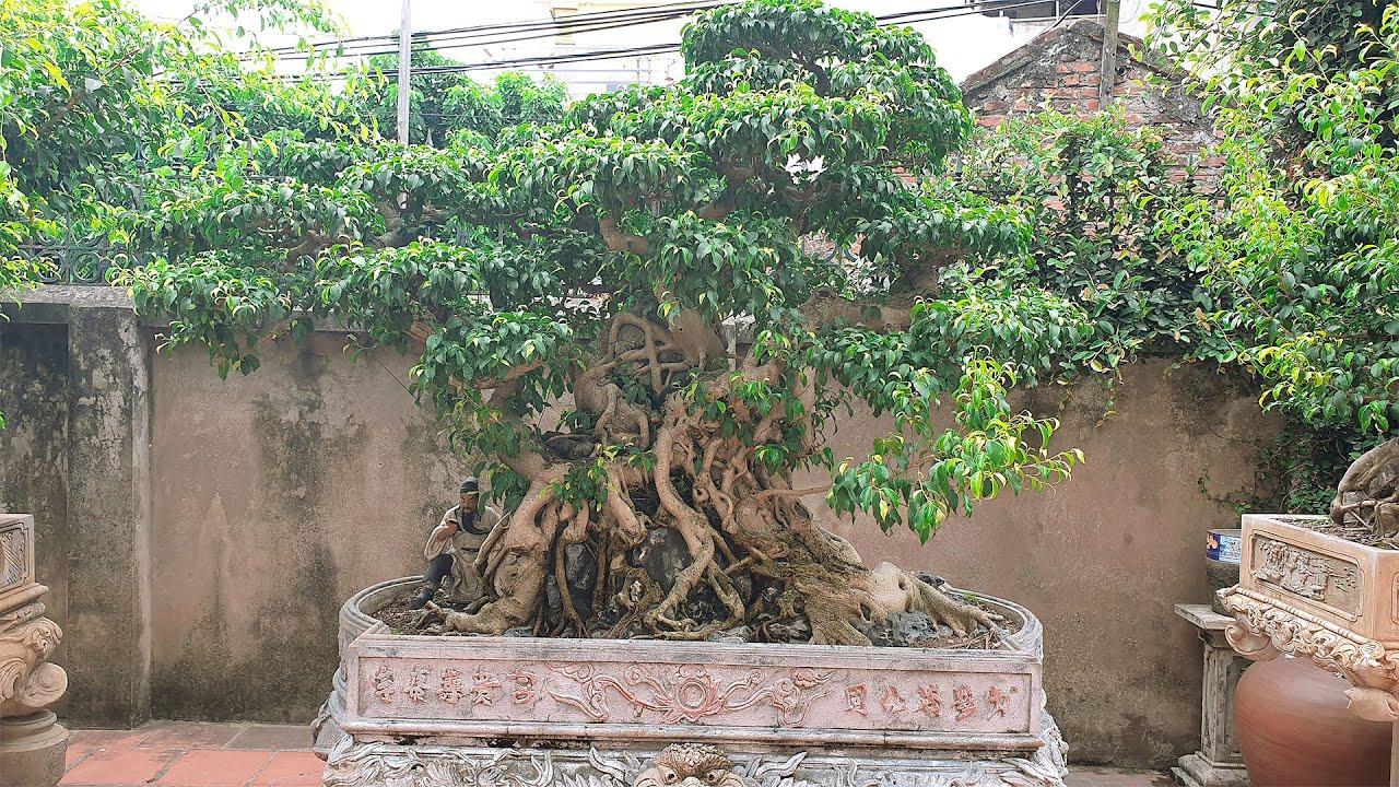 Thăm vườn cây cảnh nghệ thuật nhà anh Sơn Bắc Ninh
