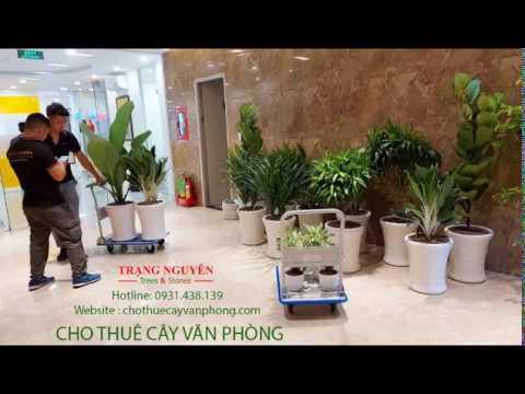 Trang Trí Cây Xanh Cho Văn Phòng | Cung Cấp & Cho Thuê cây Văn Phòng