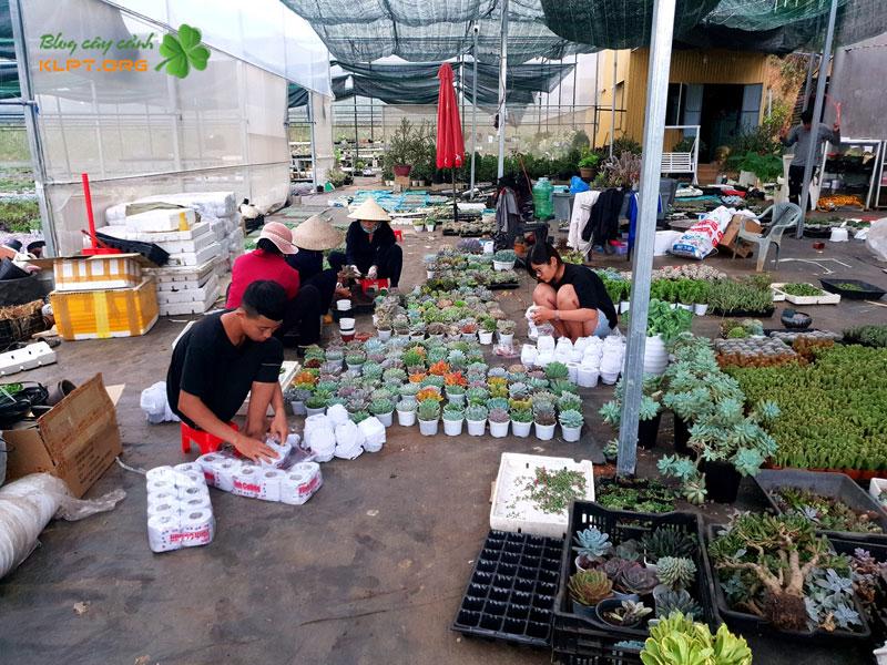 doan-ba-vuong-garden-da-lat