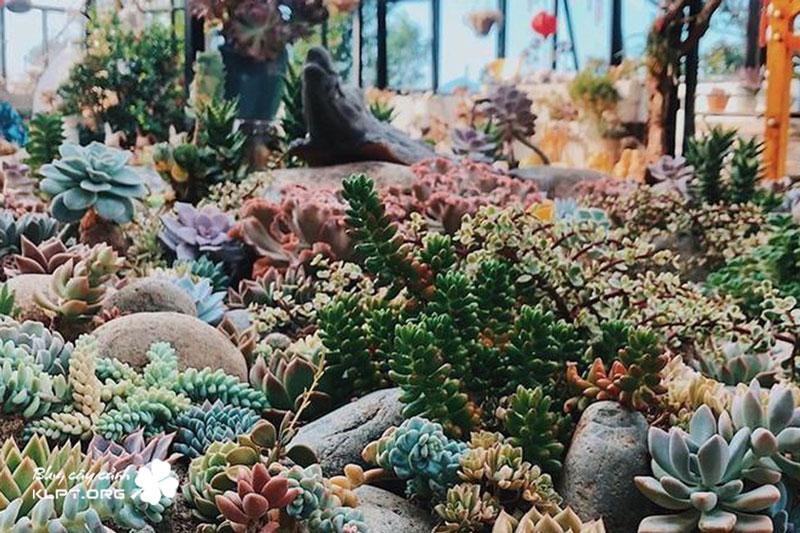 sen-da-da-lạt-green-garden