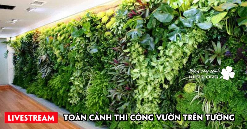 toan-canh-thi-cong-vuon-tren-tuong-phan-2