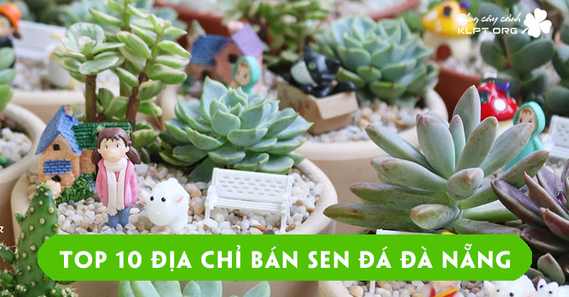 top-10-dia-chi-ban-sen-da-da-nang-chat-luong-gia-re-nhat