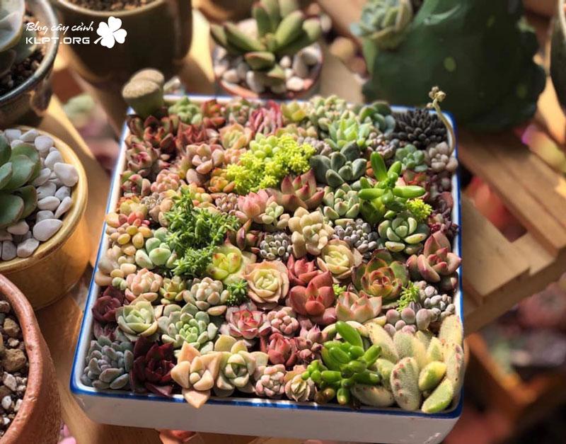 vuon-mong-nuoc-succulent-cactus-da-lat