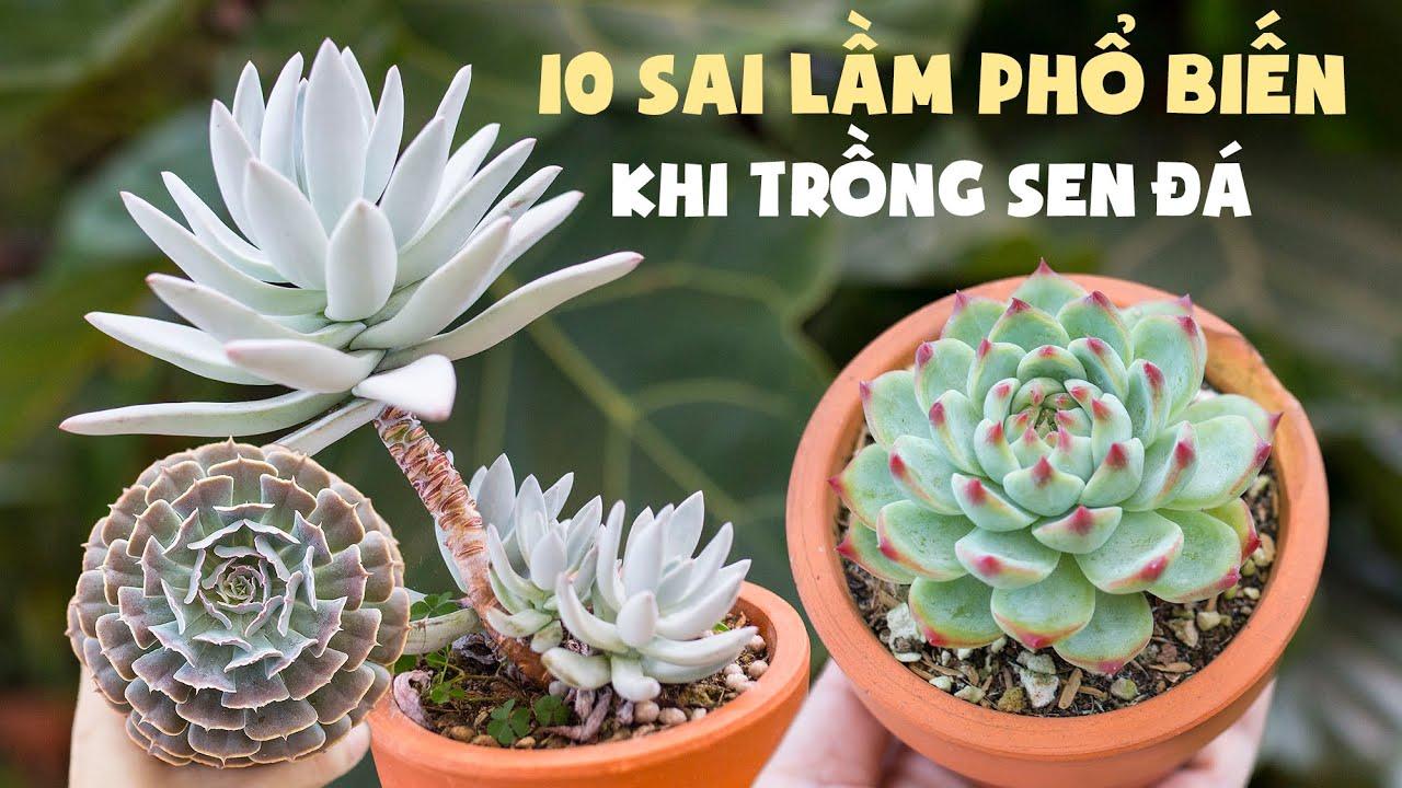 10 SAI LẦM PHỔ BIẾN KHI TRỒNG SEN ĐÁ| These things kill your sucuclents| 多肉植物| 다육이들 | Suculentas