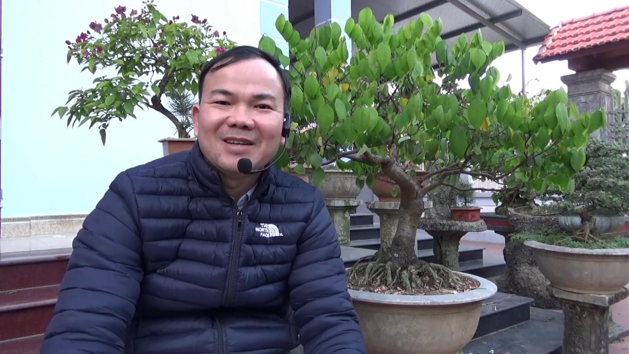 18 sai lầm người mới chơi bonsai thường mắc phải - 18 popular mistakes in making bonsai