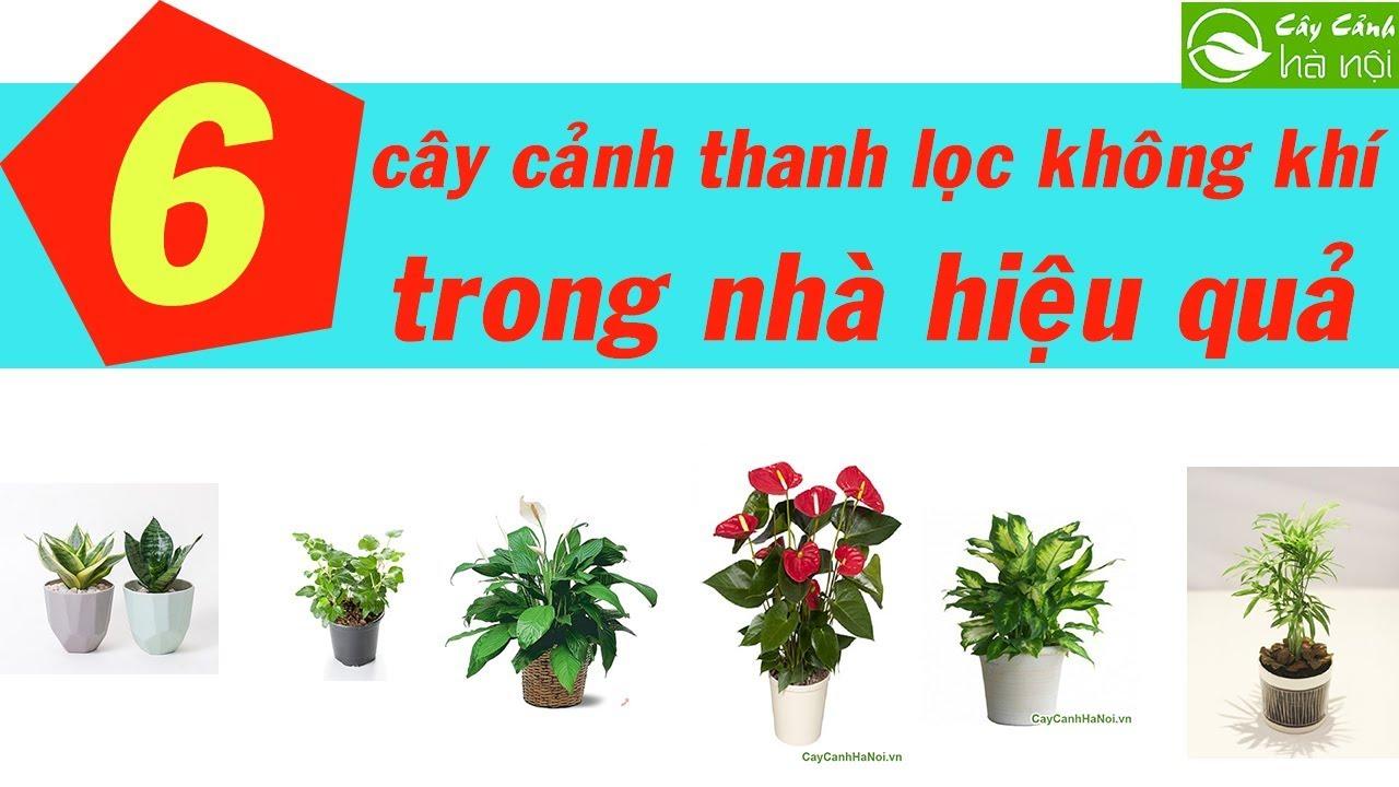 6 loại cây cảnh thanh lọc không khí trong nhà hiệu quả