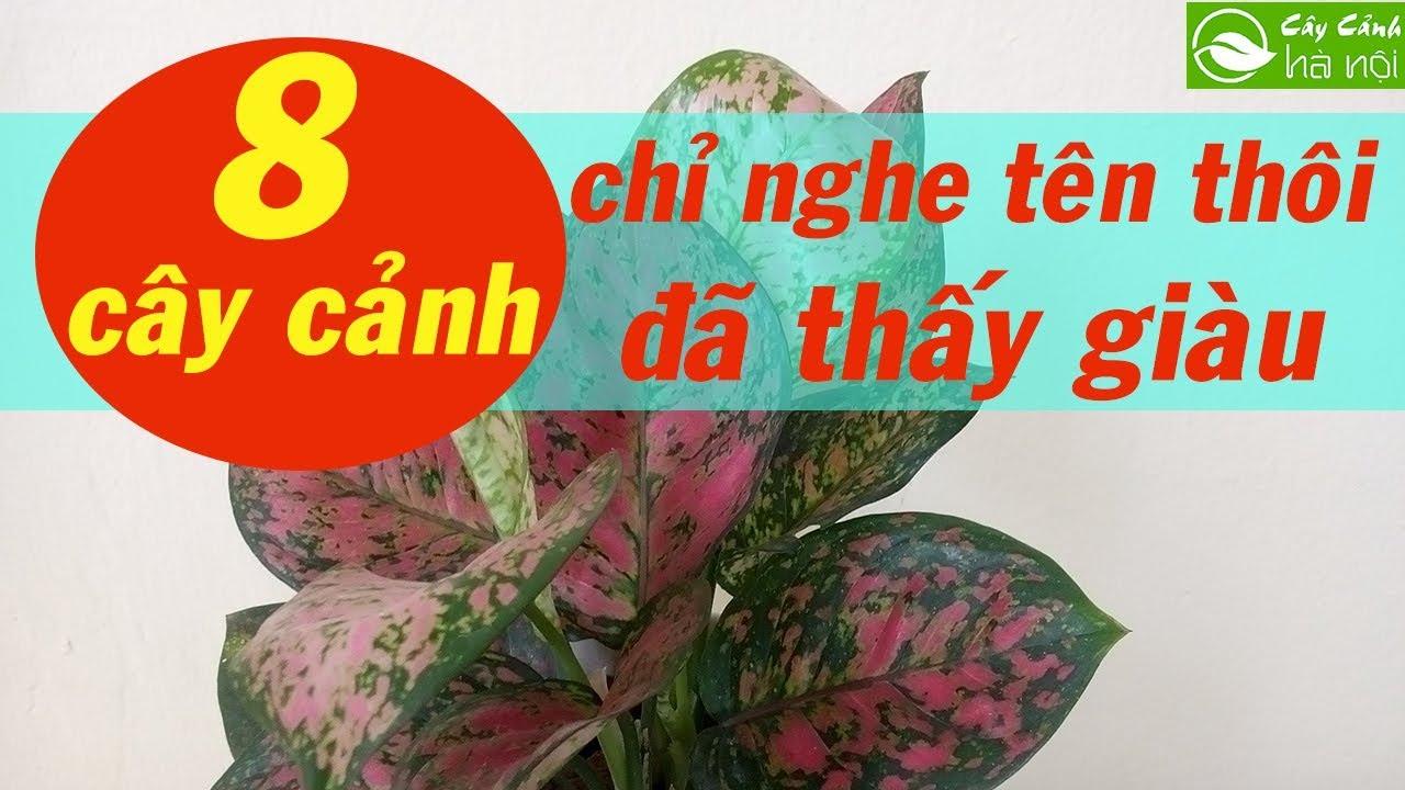 """8 loại cây cảnh """"chỉ nghe tên thôi đã thấy giàu"""""""