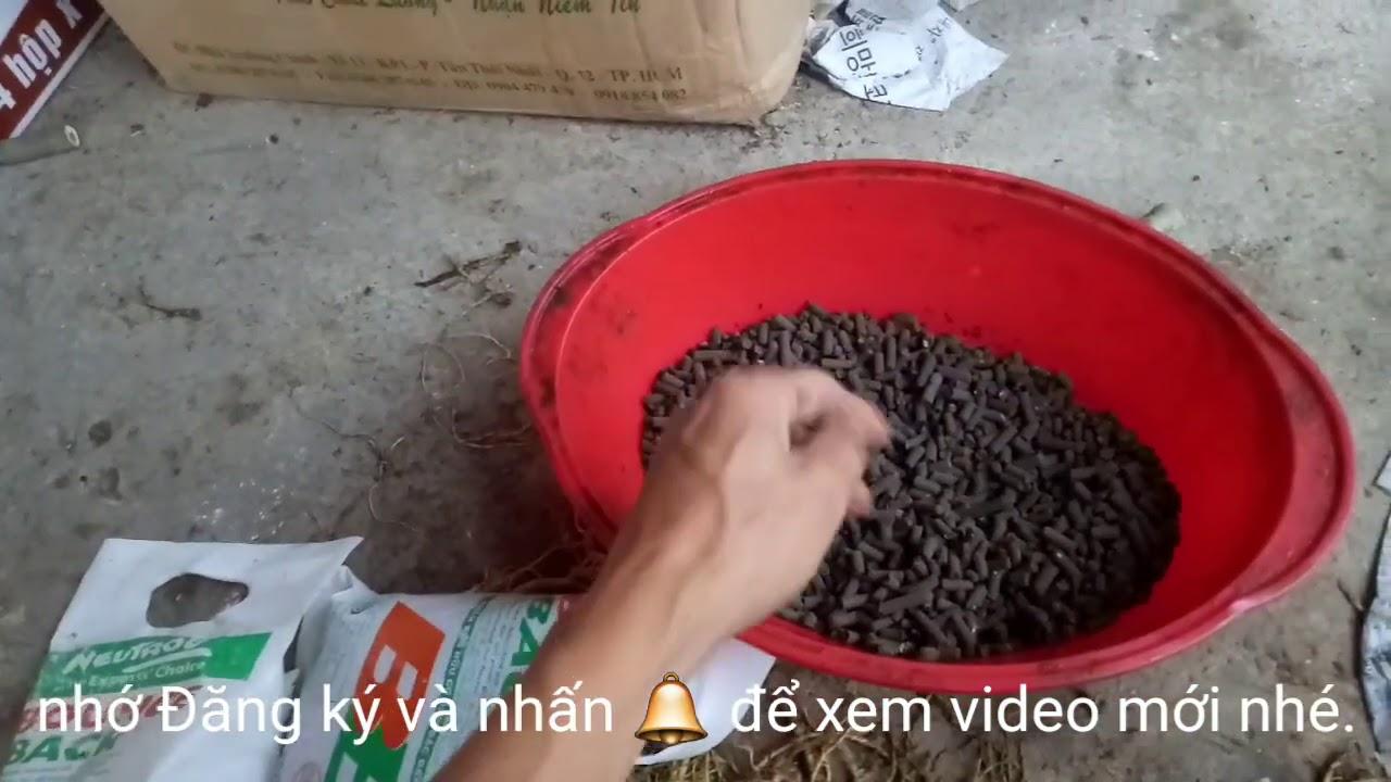BÓN PHÂN CHO CÂY SỨ: nên cho ăn phân Gì là thích hợp?/Truyền bonsai