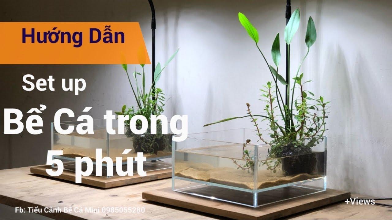 Bể cá Mini   Wabi Kusa   Bể Cá Văn Phòng   Bể Cá Để Bàn