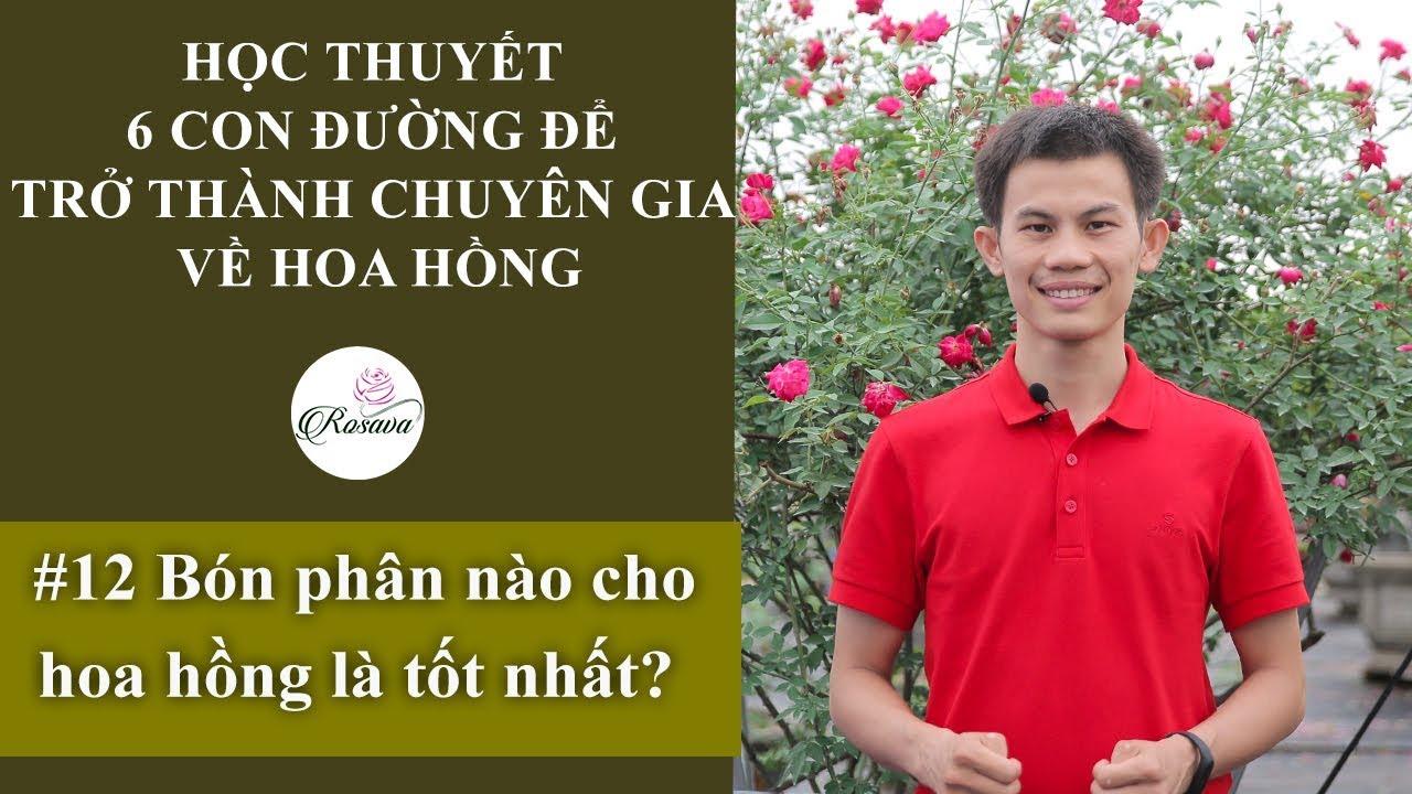 Cách bón phân cho hoa hồng   Bón phân nào cho hoa hồng tốt nhất?