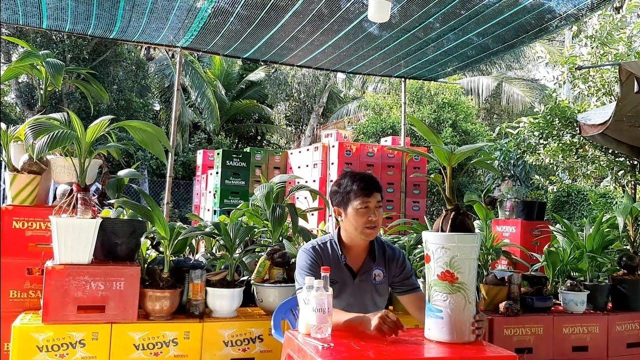 Chia sẽ cách trồng dừa bonsai từ A tới Z / Coconut bonsai
