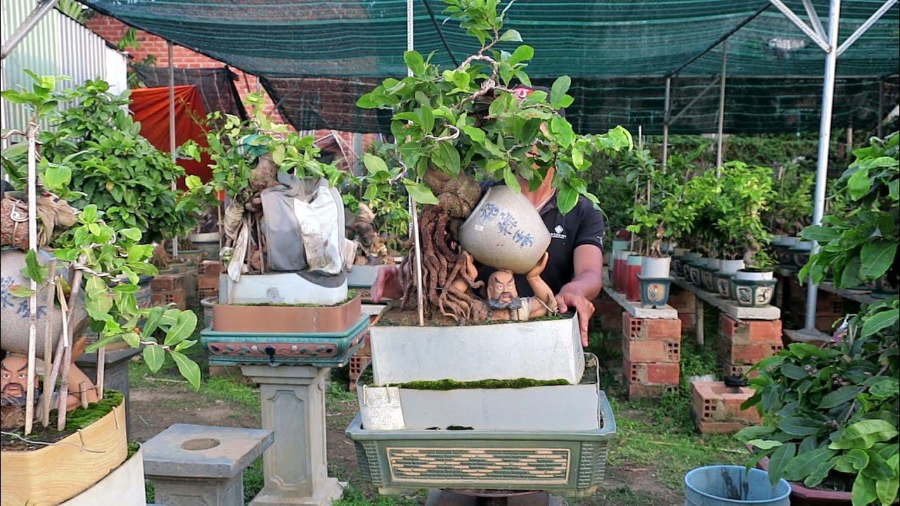 Giới thiệu chậu mai bonsai phối tượng độc đáo (đã bán)