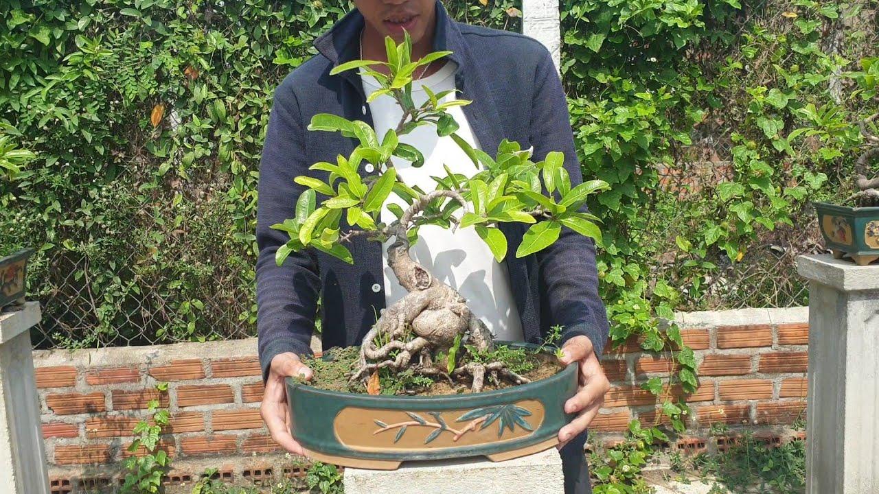 Gl cặp mai bonsai mini đế quái để bàn ngày 124 (đã bán)