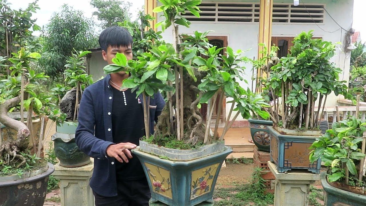Gl mai bonsai giá 4 triệu Ms T25 (Đã bán)