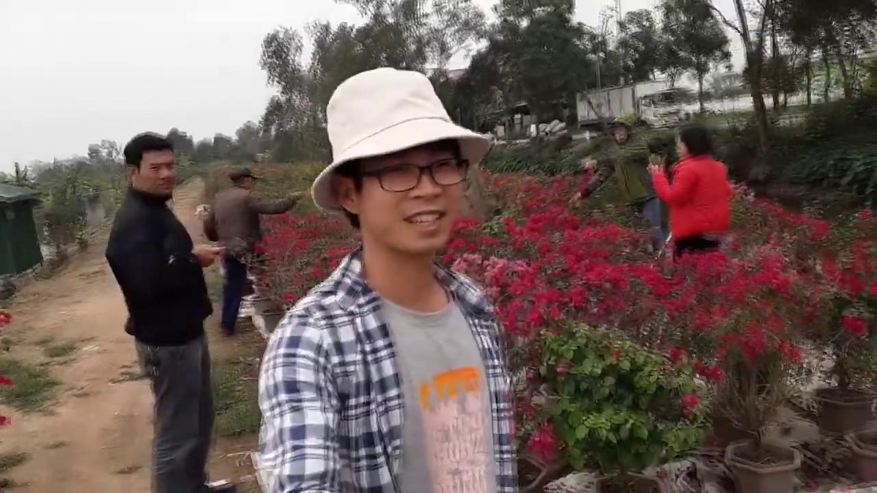 Hành trình của 1000 cây hoa giấy P1