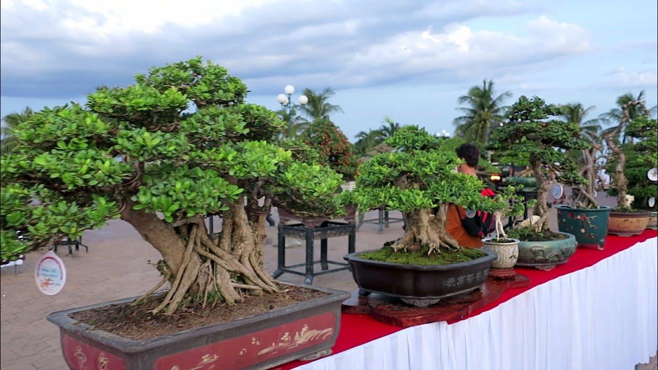 Hội triển lãm sinh vật cảnh lần thứ III tại Quy Nhơn (Bình Định)