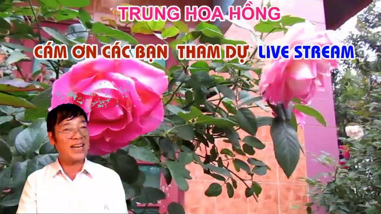 LIVE STREAM TRỰC TUYẾN CHỦ ĐỀ VỀ HOA HỒNG NGOẠI CHĂM SÓC DỄ HAY KHÓ .?