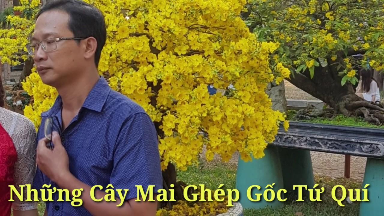 Mai Giảo Nhung - Cây Ghép Gốc Tứ Quí - Tháng 04/2020