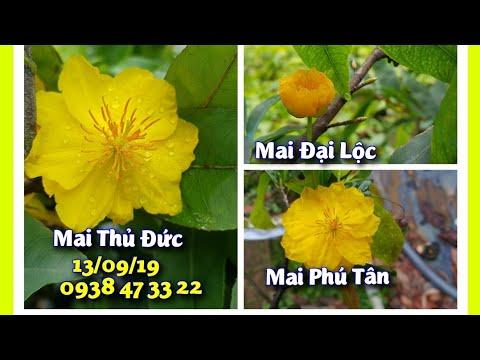 Mai Giảo Phú Yên - Phú Tân - Thủ Đức😊 13/09/19 😊 0938 47 33 22