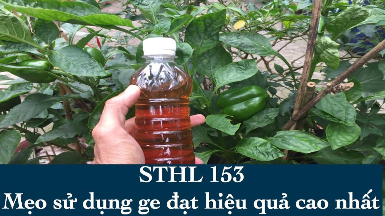 Mẹo sử dụng phân bón ge hiệu quả - Sổ tay hoa lan số 153