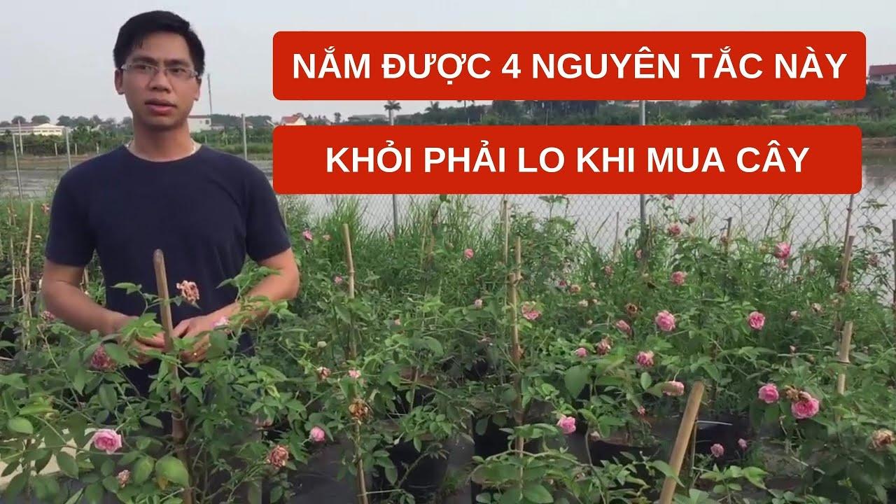 Nắm được 4 nguyên tắc này thì khỏi phải lo khi mua hoa hồng