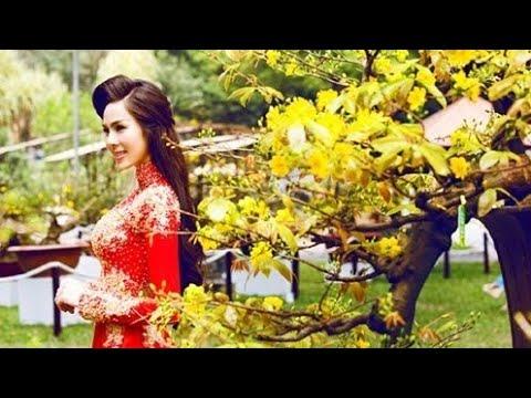 Ngắm mai bonsai đẹp Bình Định
