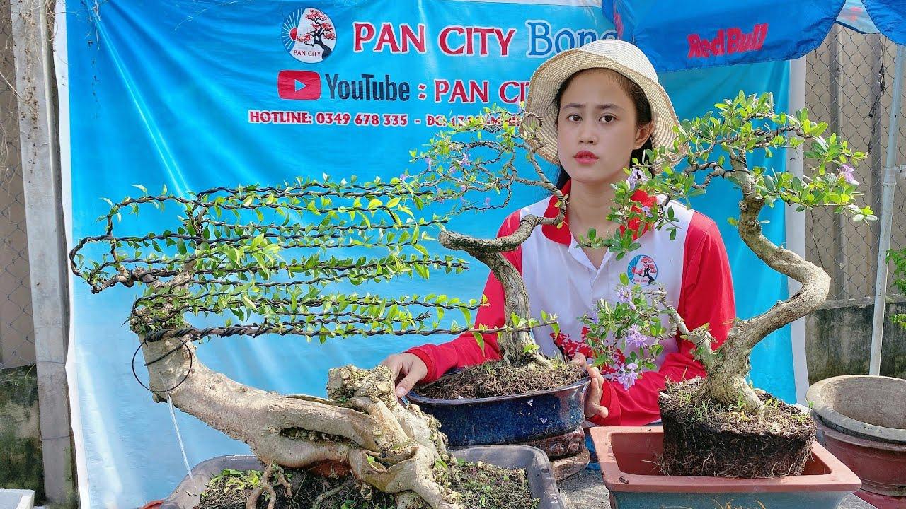 Pan City 115   Vườn bonsai mini và tầm trung lên sóng hằng ngày hôm nay nhiều cây đẹp nha anh em