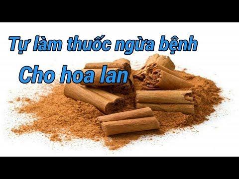 SỔ TAY HOA LAN SỐ - 128 -NGỪA BỆNH CHO HOA LAN BẰNG QUẾ - How to properly use cinnamon with orchids