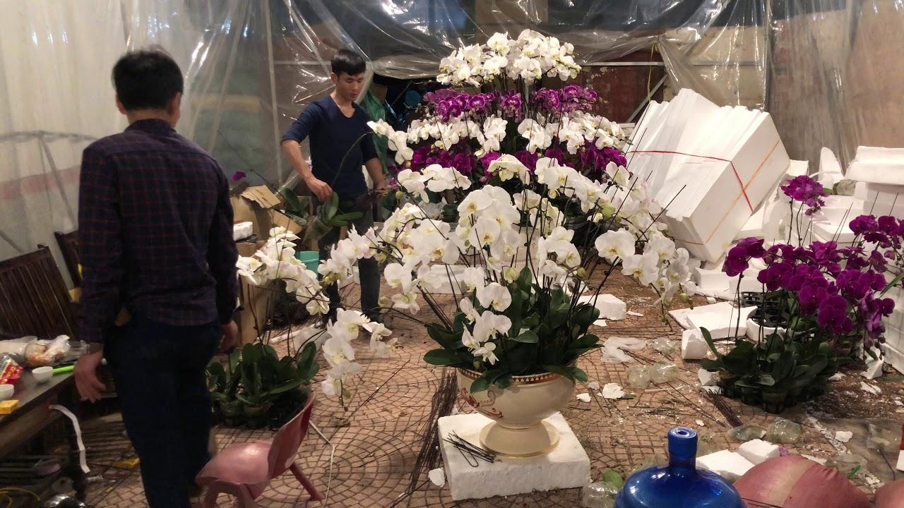 Sắp Đến Tết Tân Sửu 2021 Chưa Các Bác Ơi   CÂY CẢNH CHỢ HÀNG   Hải Phòng   www.caycanhchohang.com